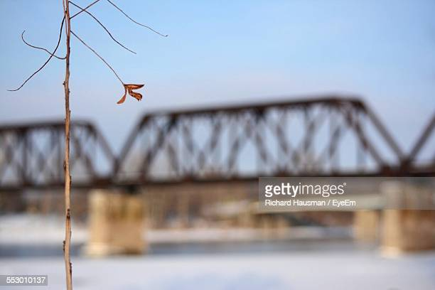 Dry Plant By Railroad Bridge Against Sky During Winter