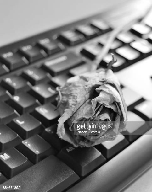 A dry rose on a black keyboard
