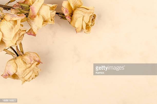 ドライにヴィンテージ紙のバラ