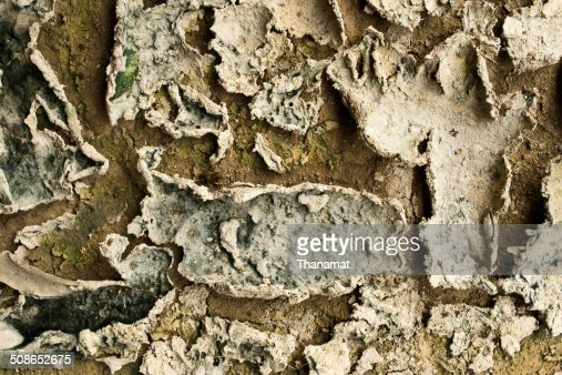 Dry soil texture background : Stock Photo