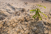 Plant survival in arid desert like conditions.
