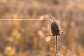Dry plant in cobweb on blurred background, close-up