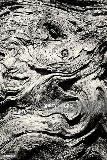 Dry Tree Bark