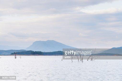Secco albero morto in dam : Foto stock