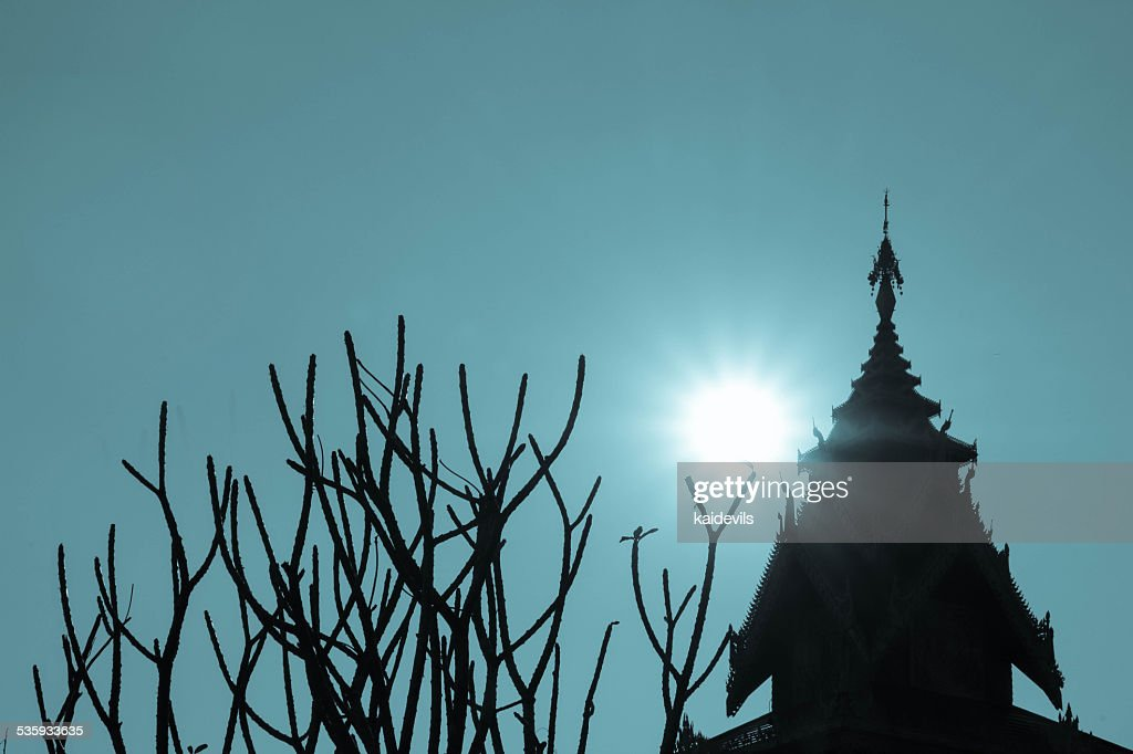 dry tree in the temple : Stock Photo