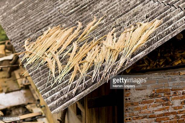 Drying cane on rooftop for sweeping