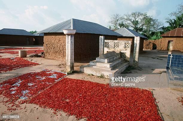 Drying peppers Benin