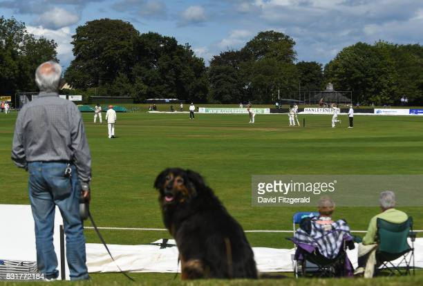 Dublin Ireland 15 August 2017 Harry Deegan watches on with his dog Buddy a BerneseCollie aged 11 during the ICC Intercontinental Cup match between...