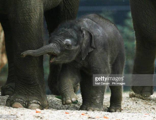 Dublin Zoo's latest arrival an unnamed male elephant who was born four days ago to his 17 year old mother Yasmin Weighing in at 80kgs it is the...
