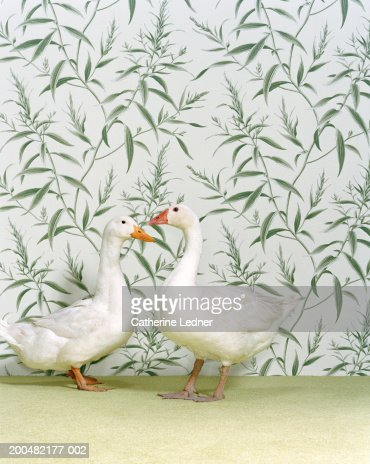 Duck and goose standing on carpet, wallpaper background : Stock Photo