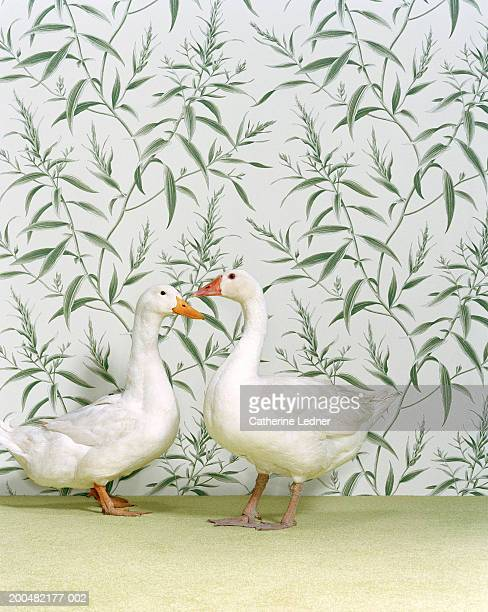 Duck and goose standing on carpet, wallpaper background