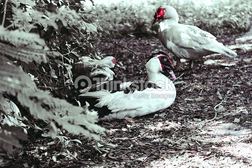 Duck bird animal outdoor park nature background