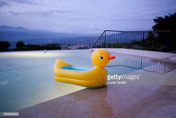 Duck floating in still swimming pool