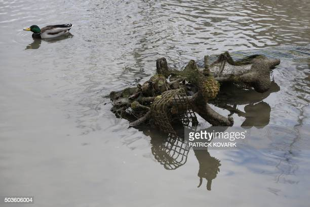 A duck paddles near a Velib public use bicycle in the canal Saint Martin in Paris on January 6 2016 during a drainage and cleaning operation / AFP /...