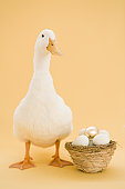 Duck standing by basket of eggs, golden egg on top