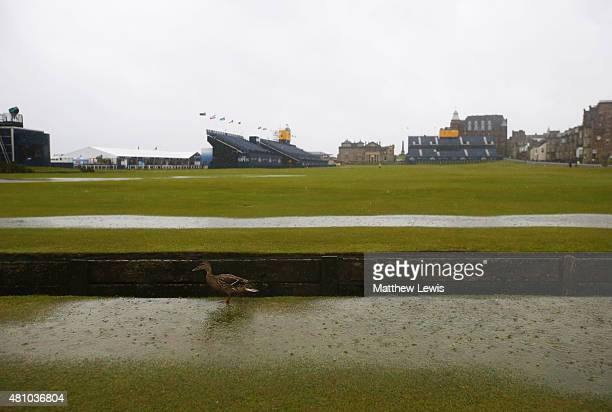 A duck walks across the 18th hole fairway as rain falls prior to the second round of the 144th Open Championship at The Old Course on July 17 2015 in...