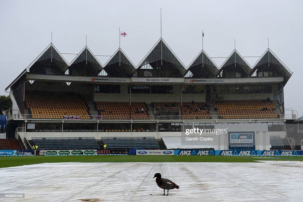 A duck walks on the covers as rain delays the start of day five of the Test match between New Zealand and England at Basin Reserve on March 18, 2013 in Wellington, New Zealand.