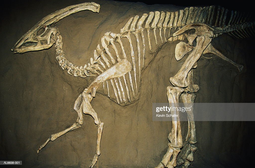 Duckbill dinosaur (Parasaurolophus) : Stock Photo