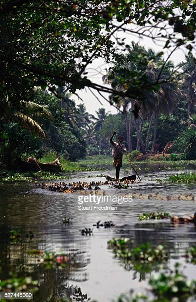 A duckfarmer punts downstream with his flock in the Backwaters Kerala The nearby village of Aymenam is where Arundhati Roy set her Book Prize winning...