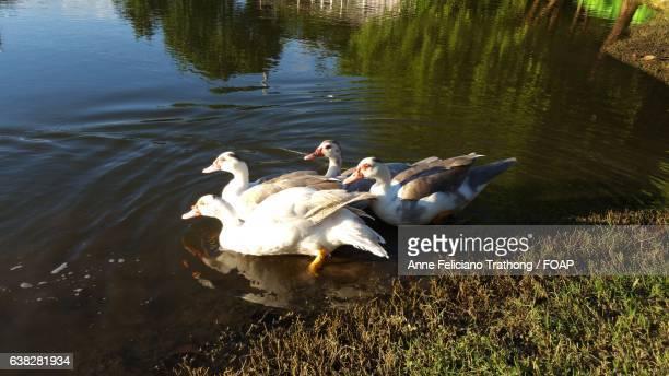 Ducks floating on lake