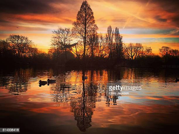 Ducks on the pond in Wandsworth Common early in the morning on March 8 2016 in London England