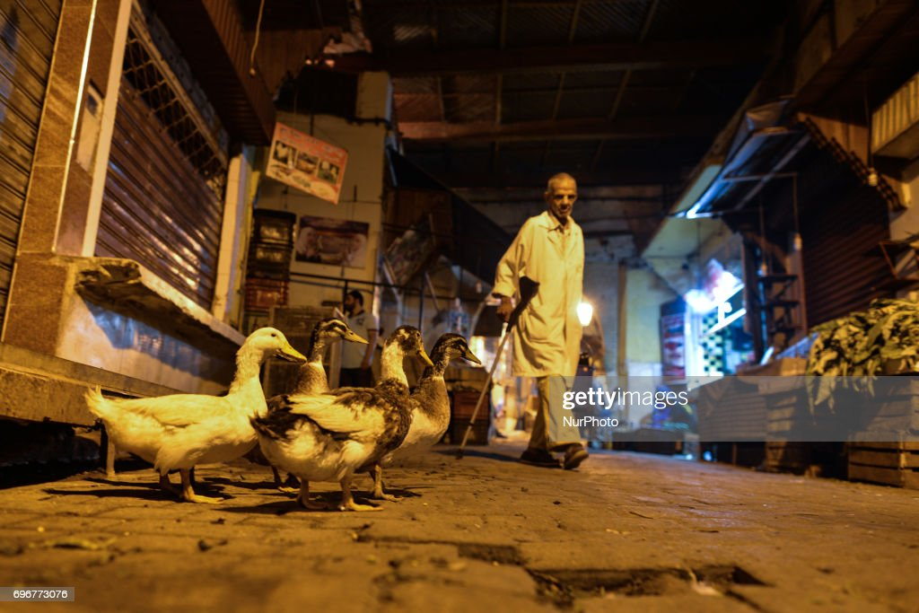 ducks seen on the main street in fes medina a scene from a daily life
