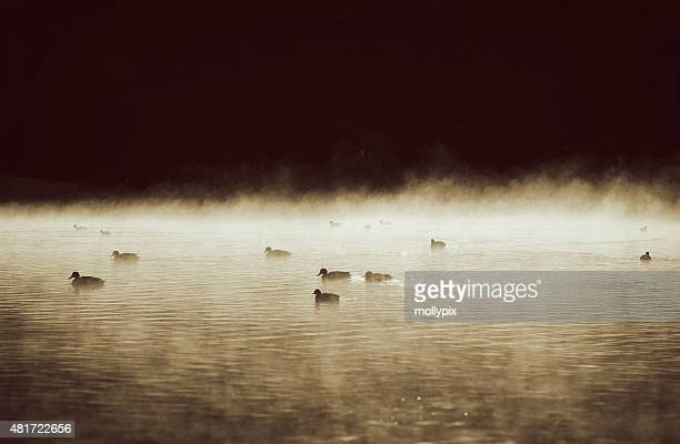 Ducks Silhouetted on a Misty Lake in Sepia Tone