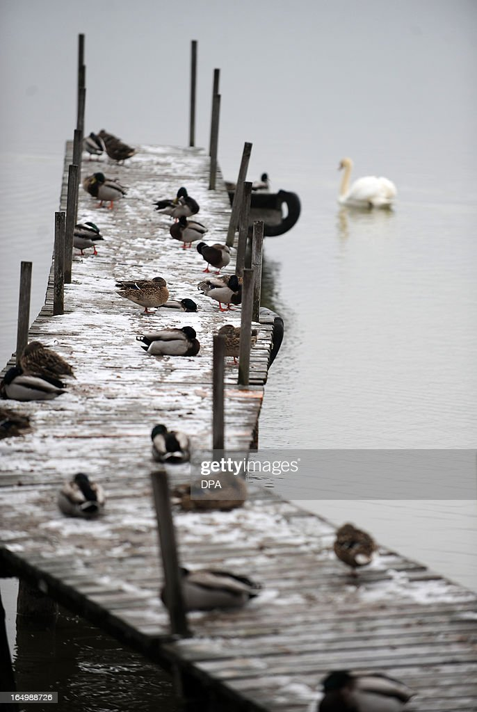Ducks sit on a footbridge at the Ammersee lake near Inning, southern Germany, on March 30, 2013. Meteorologists forecast temperatures around freezing pont for the coming week in Germany. AFP PHOTO / ANDREAS GEBERT GERMANY OUT