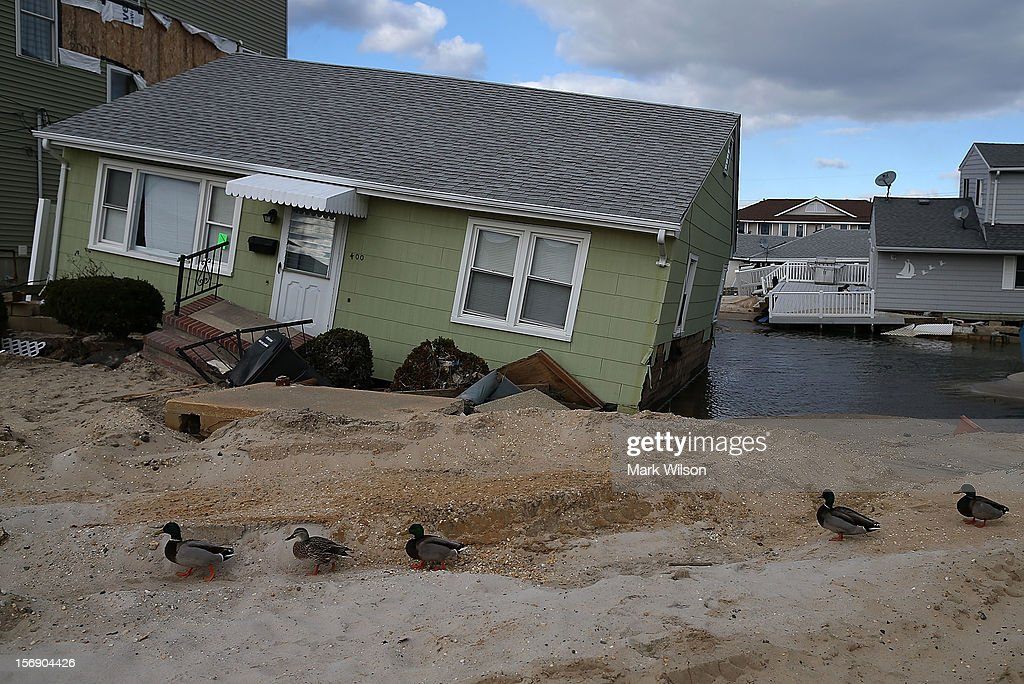 Ducks stand in front of a home damaged by Superstorm Sandy, on November 24, 2012 in Ortley Beach, New Jersey. New Jersey Gov. Christie estimated that Superstorm Sandy will cost New Jersey $29.4 billion in damage and economic losses.