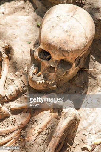 Dug up the skull : Stock Photo