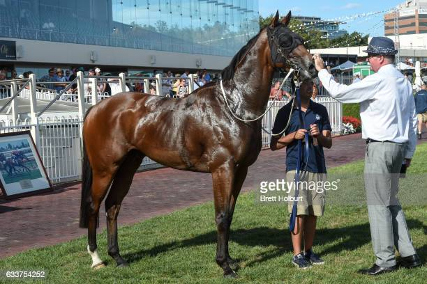 Duke of Brunswick after winning Darren Gauci Farewell Handicap at Caulfield Racecourse on February 04 2017 in Caulfield Australia