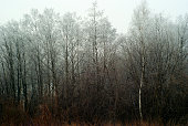 Snowless winter grove, overgrown with bushes, in cloudy foggy weather'n'n