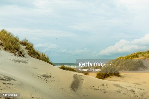 Dune and grass landscape