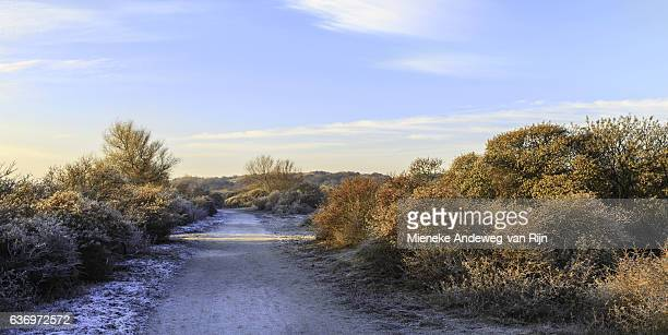 Dune landscape, called Berkheide in wintry setting