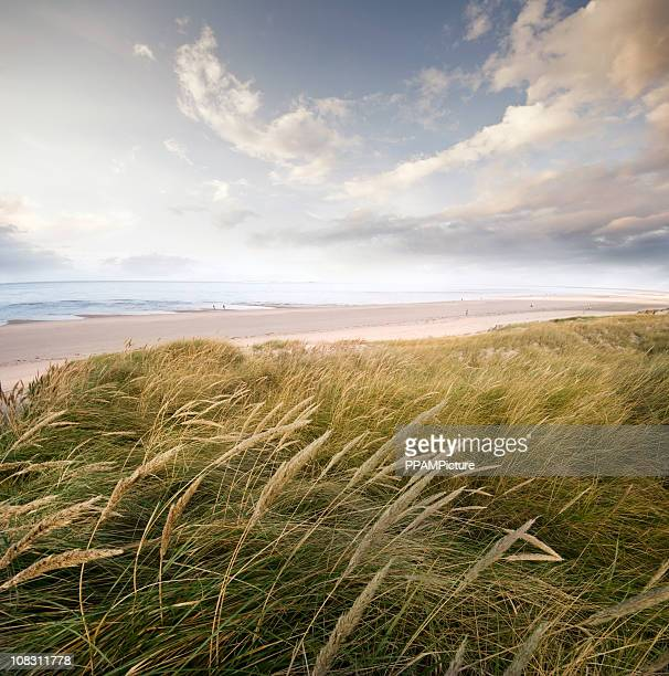 Paesaggio di duna