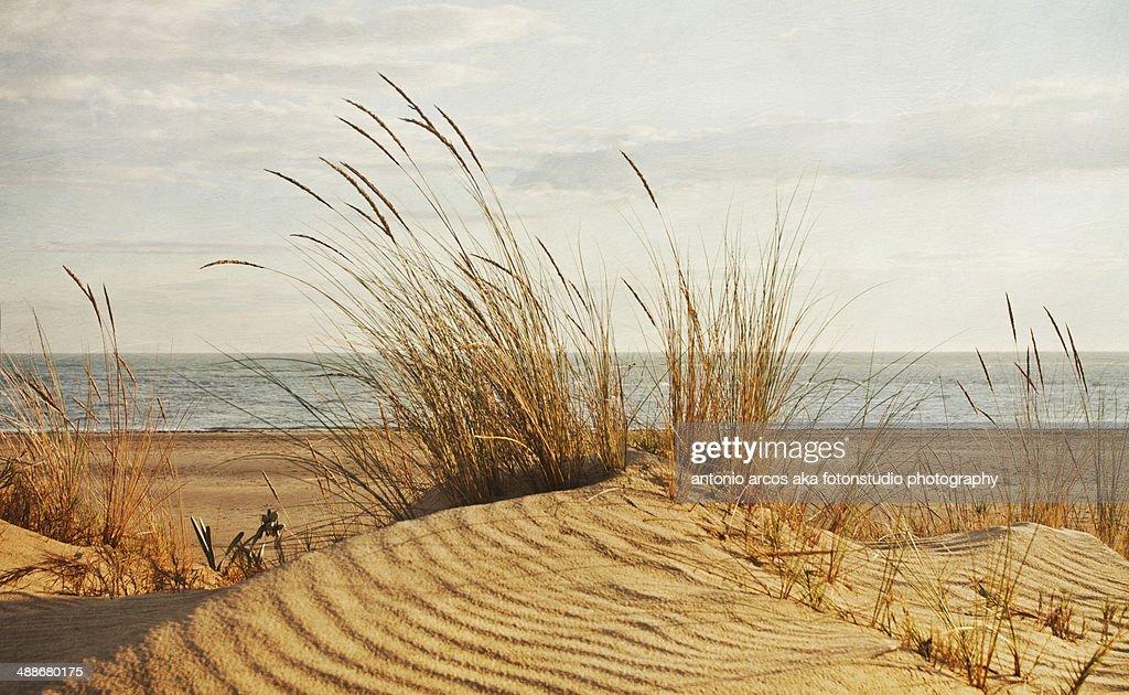 Dune&Beach