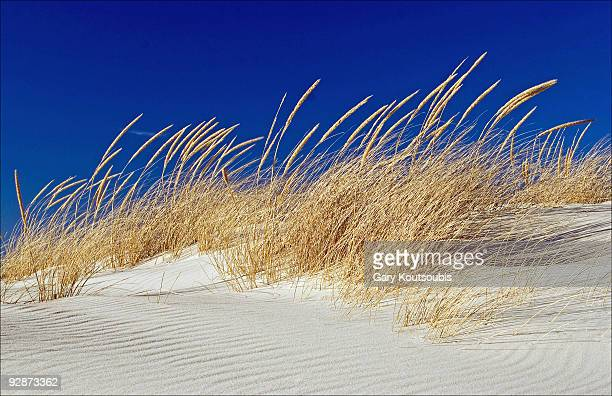 Dunes and Beach Grass