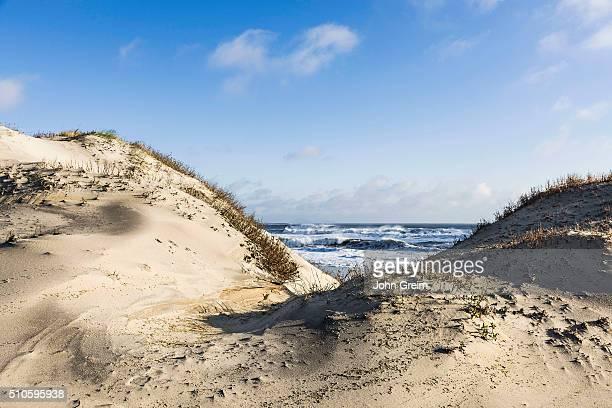 Dunes and ocean at Cape Hatteras National Seashore