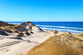 The dunes near Skagen are wonderful, wild nature