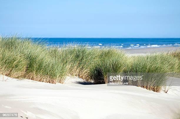 Dunes, grass, beach and sea