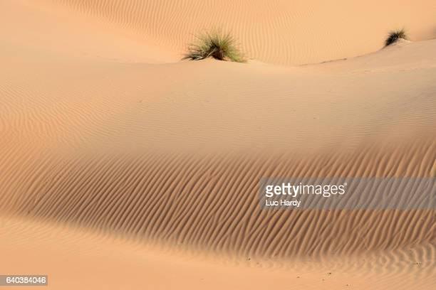 Dunes of Oman