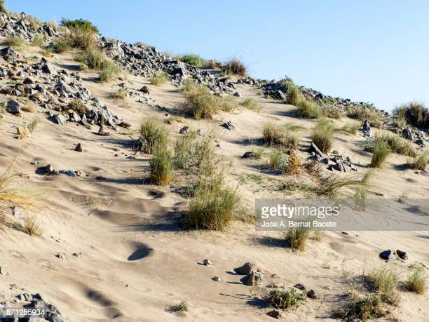 Dunes of sand and vegetation under a blue sky with the full moon in the sky. Cabo de Gata - Nijar Natural Park, Cala Monsul, Biosphere Reserve, Almeria,  Andalusia, Spain.