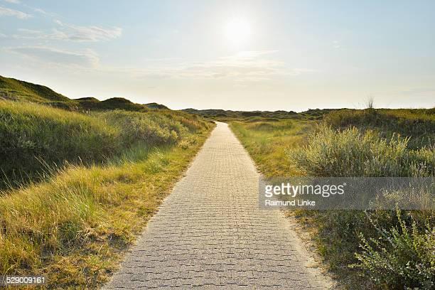 Dunes Path with Sun