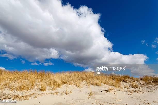 Dunes, Sankt Peter-Ording, Eiderstedt peninsula, Schleswig-Holstein, Germany