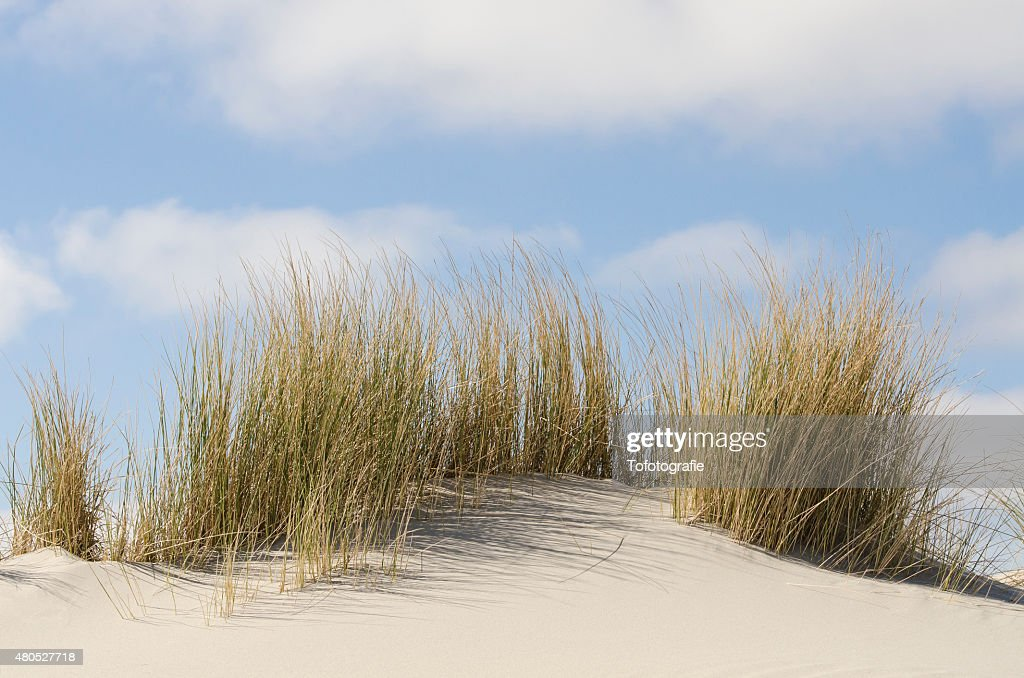 Dunes with marram grass : Stockfoto