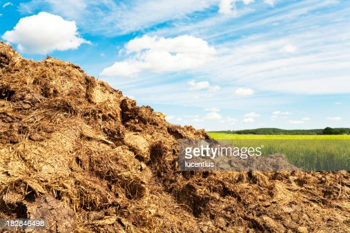 Dung heap in a field in summer