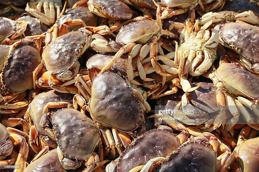 Dungeness Crabs sit in a bin after being offloaded from a fishing vessel on November 17 2010 in San Francisco California After a brief delay due to...