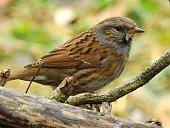 Little migratory bird