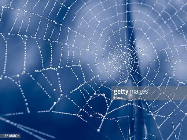 Duotone web