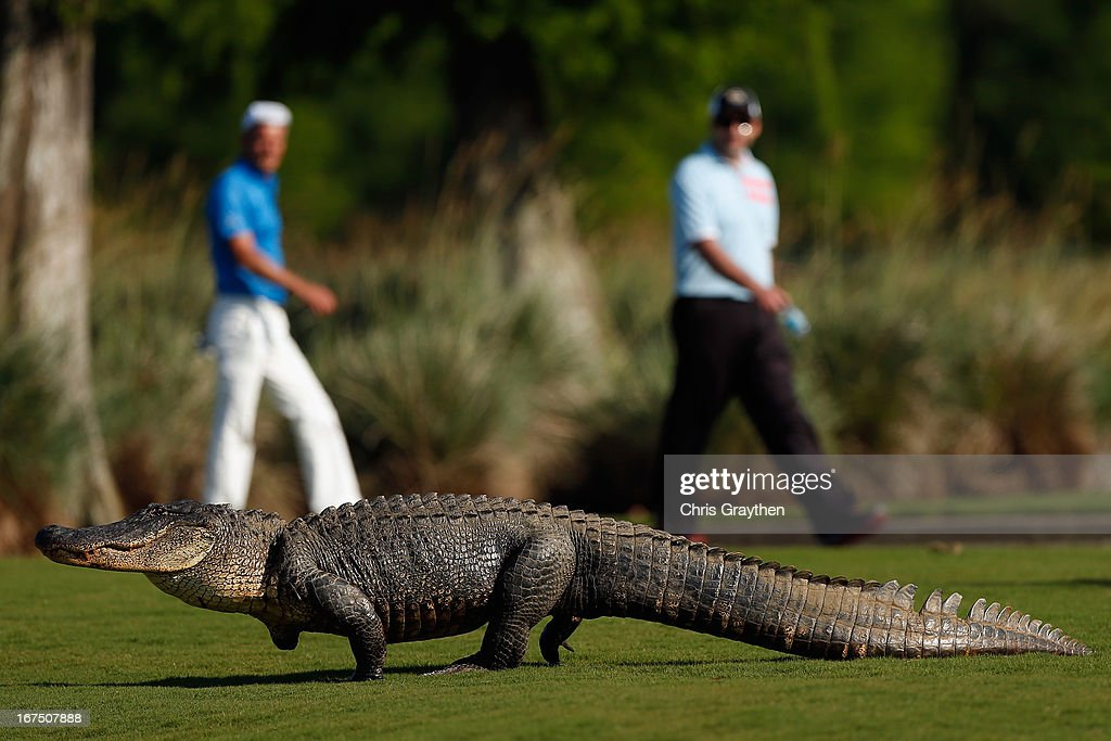 during the first round of the Zurich Classic at TPC Louisiana on April 25, 2013 in Avondale, Louisiana.